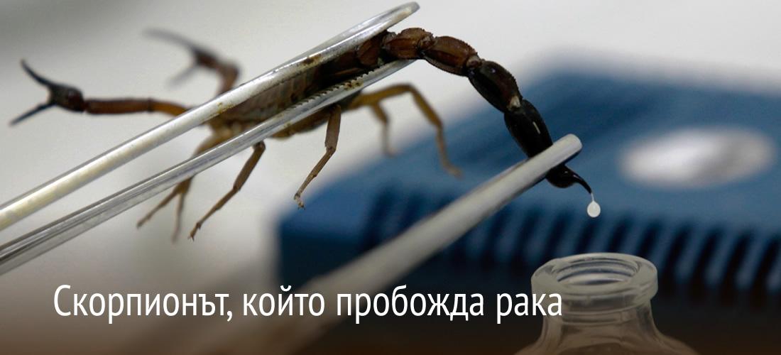 Скорпионът,  който пробожда рака